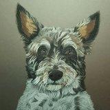 Pastel portret van jouw huisdier 40 x 60cm _