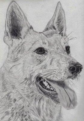 Potlood portret van jouw huisdier 20 x 30cm