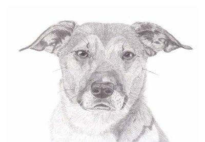 Potlood portret van jouw huisdier 30 x 40cm